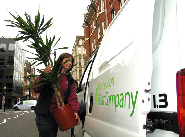 The london plant company suppliers of indoor office - Interior plant maintenance contract ...